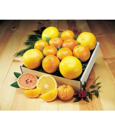 Gift Basket of Israeli Citrus fruits - Oranges